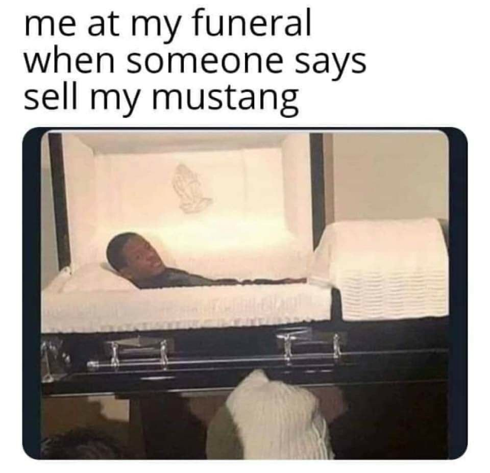 Pin By Sharon Walters On Mustang Memes Funny Memes Well Meme