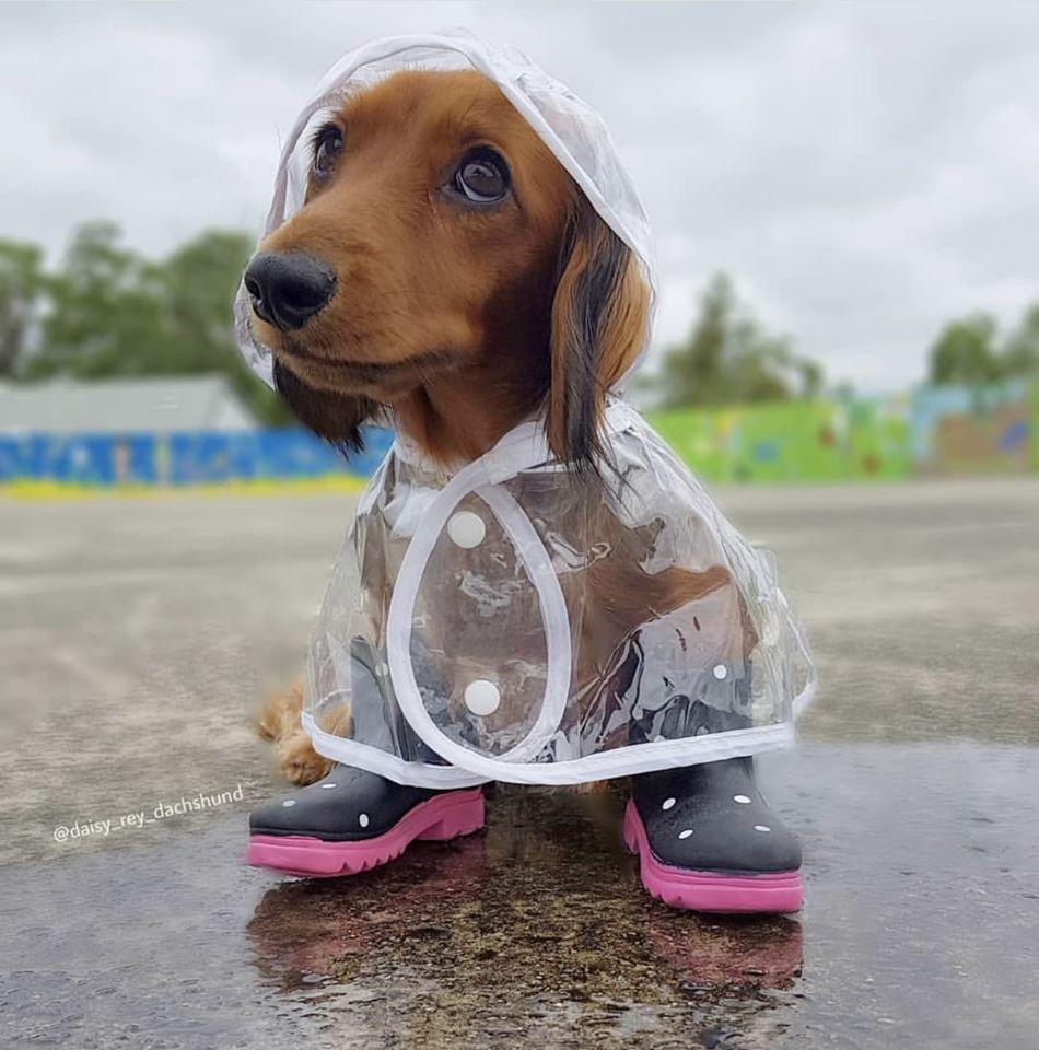 Wiener Dog Meme Face