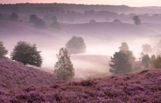Posbank-area (part of the Veluwe) in Holland