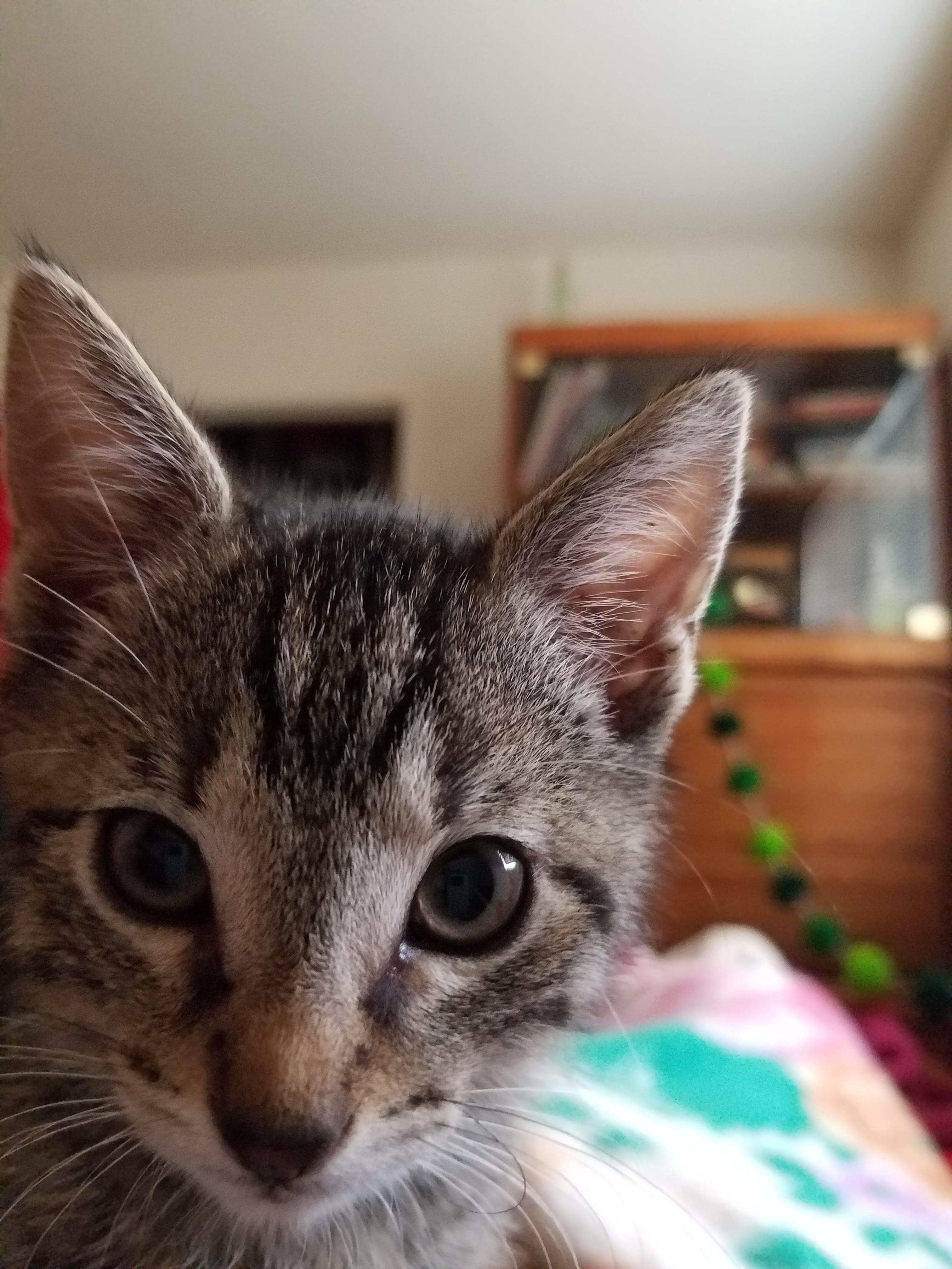 Our new kitten pocha iftkgptr cute puppies cats