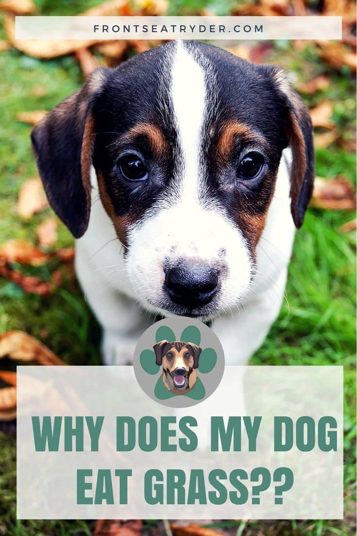 """Ever wonder to yourself, """"Why does my dog eat grass"""