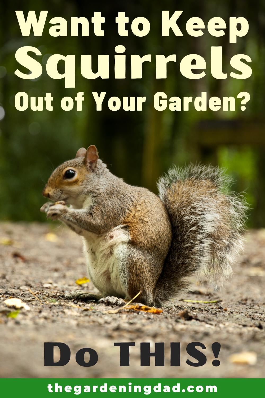 72ee320c7af3ccaa26e281884f6e147d - How To Get Rid Of Squirrels The Natural Way