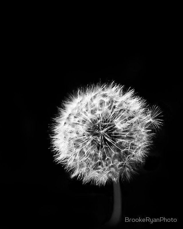 Black And White Dandelions Photographic Print By Brookeryanphoto Dandelion Wall Art White Dandelion Dandelion Art