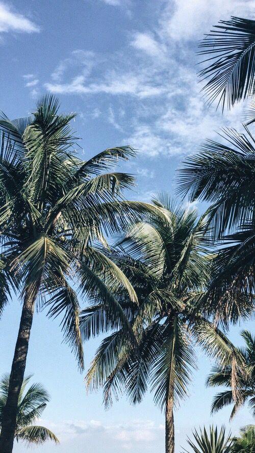 Palms iPhone wallpaper Achtergronden, Palmboom