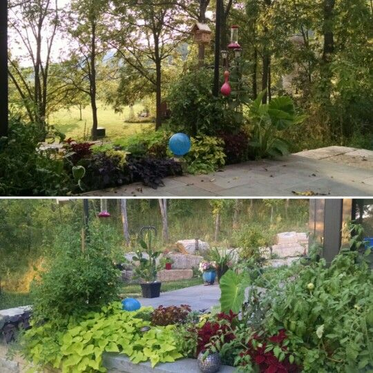 2015 patio garden.