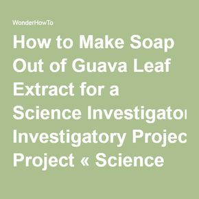 How To Make Soap Out Of Guava Leaf Extract For A Science