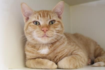 Goose has been adopted from Seattle Humane )http//www