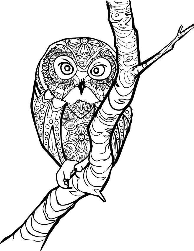 Amazon Animal Creations Coloring Book Inspired By Nature 9780692585412