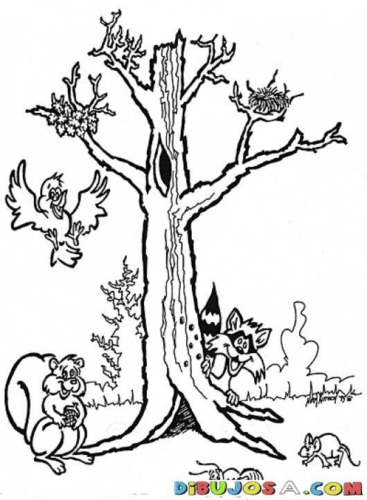 Animales Del Bosque Con Un Arbol Para Colorear  COLOREAR DIBUJOS