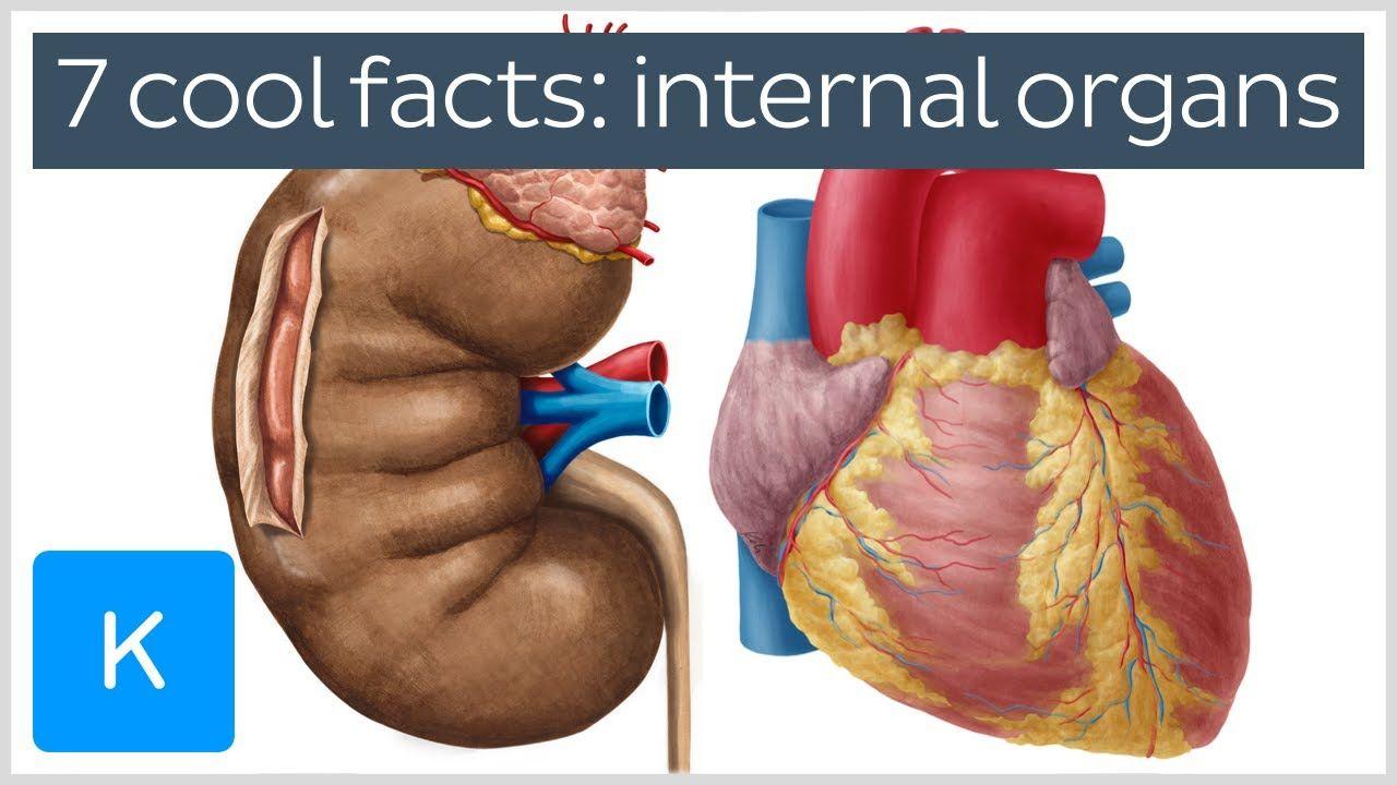 Image Of Human Internal Organs Human Anatomy Drawing Pinterest
