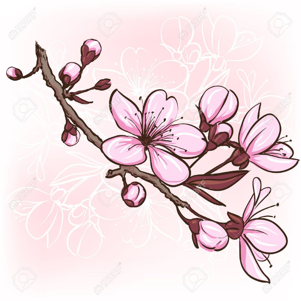 Cherry Blossom Decorative Floral Illustration Of Sakura Flowers Cherry Blossom Drawing Flower Drawing Blossom Tattoo