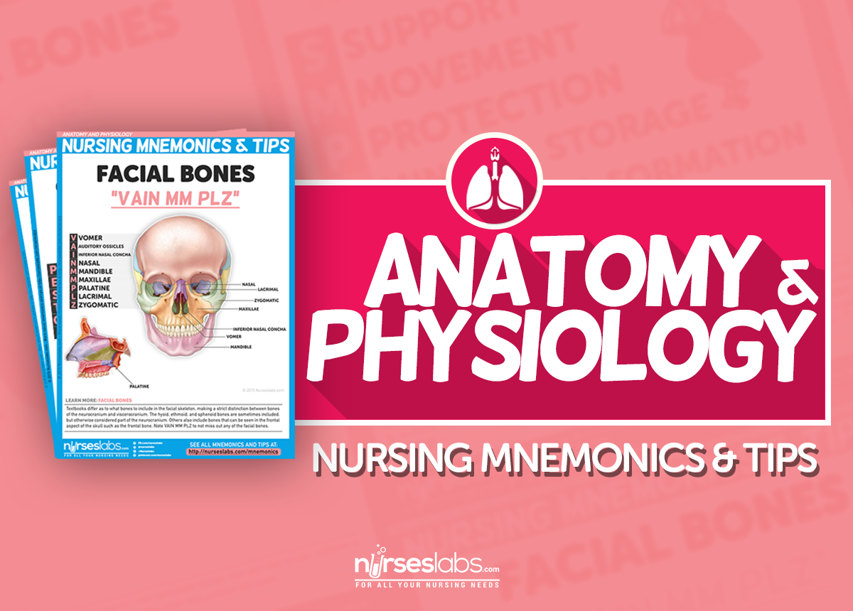 Online Anatomy & Physiology Course with Textbook and Study Guide ...