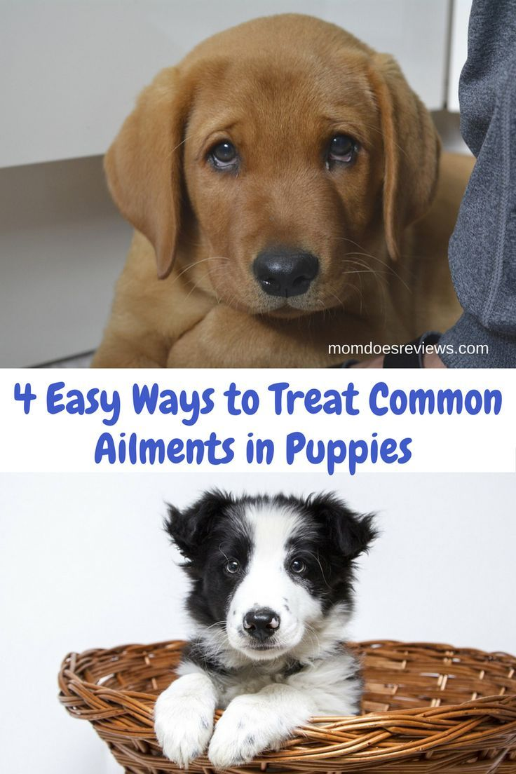 4 Easy Ways To Treat Common Ailments In Puppies And Adolescent