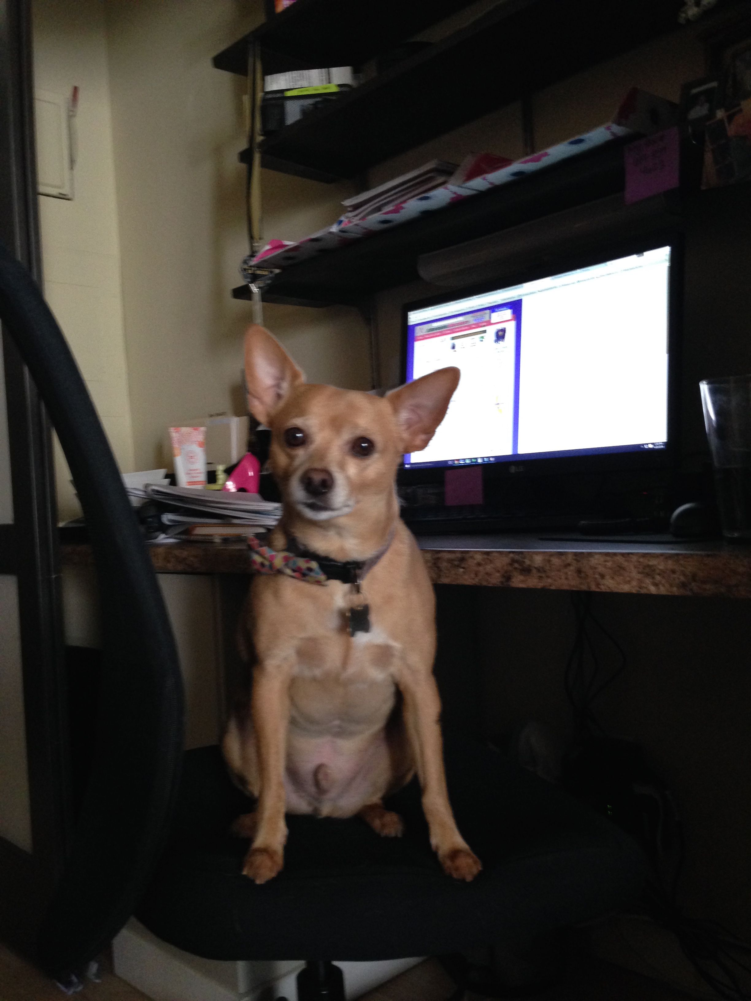 We love our little office mascot, Marty! He loves tacos, hikes, the beach, and being an expert watch dog. Way to go, Marty. You make us all smile :)