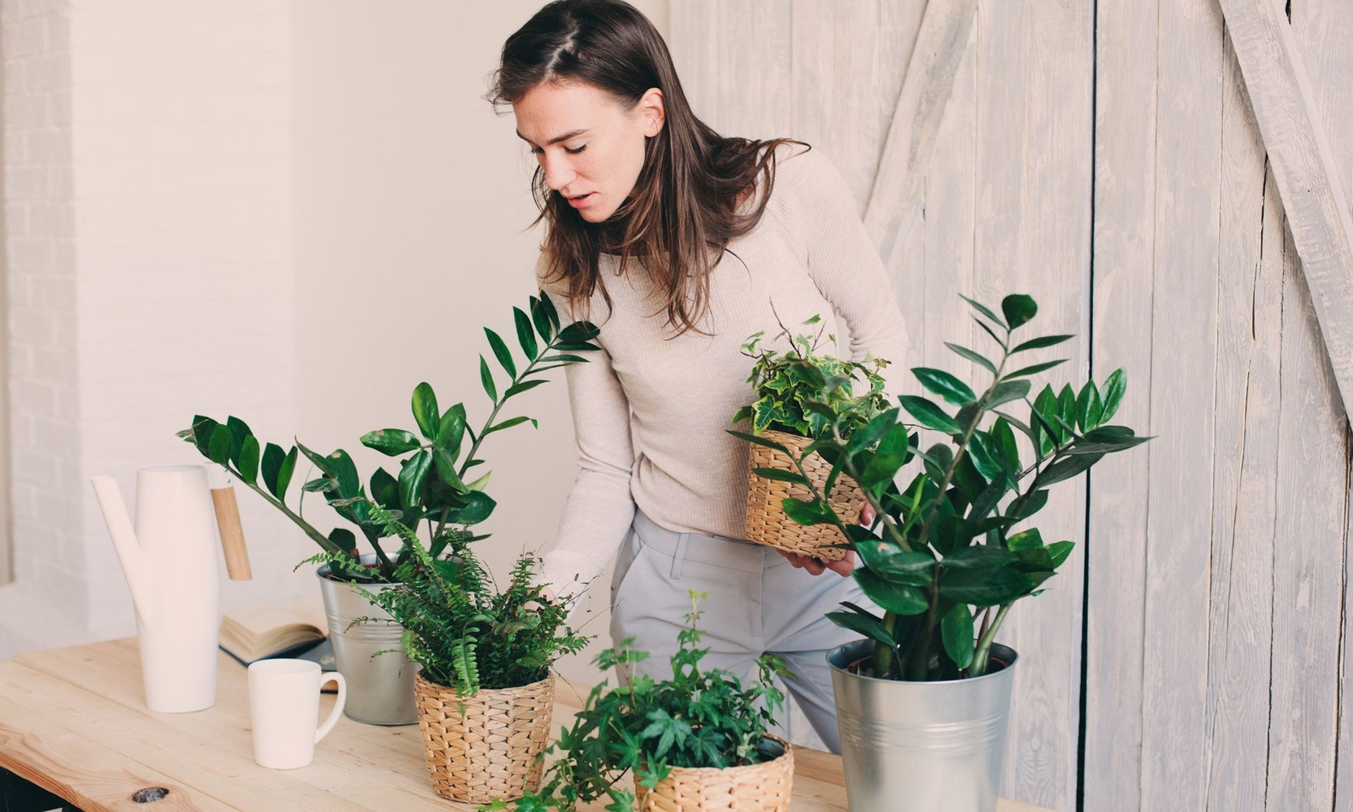 7 House Plants That Can Seriously Help Your Allergies