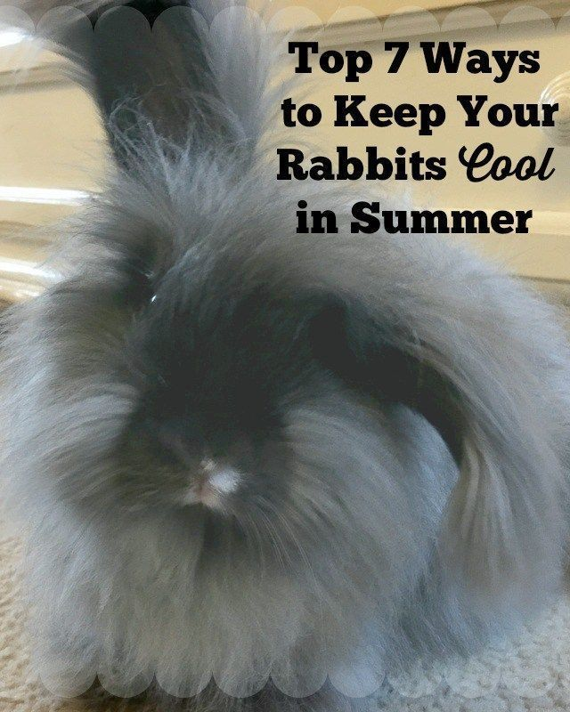 Top 7 Ways to Keep your Rabbits Cool in Summer - Rabbit, Angora rabbit, Rabbit habitat, Meat rabbits, Pet rabbit care, Cool stuff - With the summer in full swing and the temperatures on the rise there are a couple things you can do to help your rabbits beat the heat  Rabbits are pretty hardy animals, but they do much better in…
