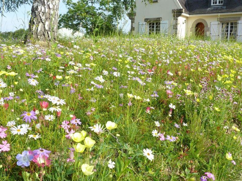 la prairie fleurie une alternative cologique au gazon gazon prairie et fleuri. Black Bedroom Furniture Sets. Home Design Ideas