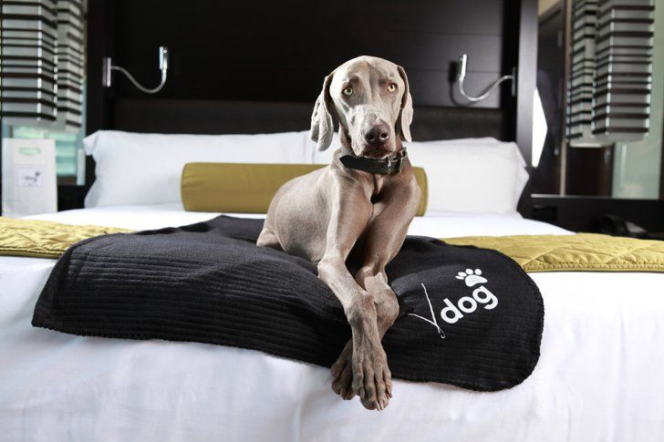 Vdara Hotel Spa In Las Vegas Dog Friendly Hotels Pet Friendly