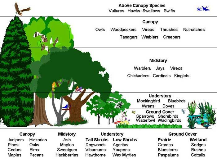 diagrams of the coniferous woodland google search 3rd grade rh pinterest com Forest Layers Diagram Parts of a Tree Trunk