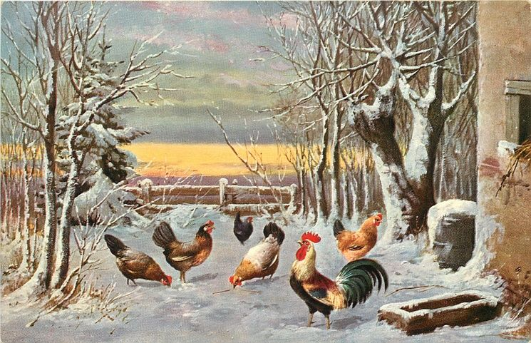 Beauty in Everything - Photography  |Winter Scenes With Chickens