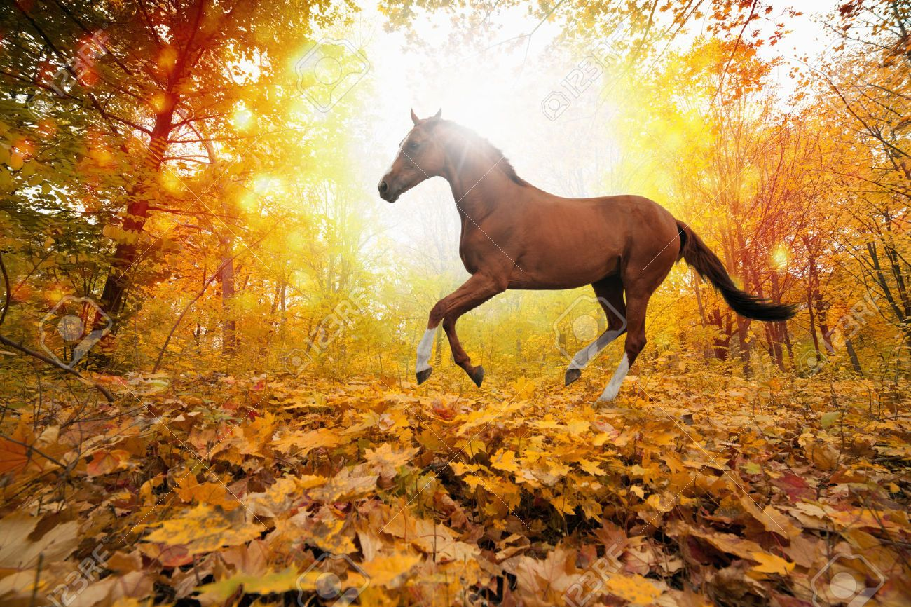 Top Wallpaper Horse Autumn - 72f3ba4be437fac136836aaedfd59a33  Best Photo Reference_69932.jpg