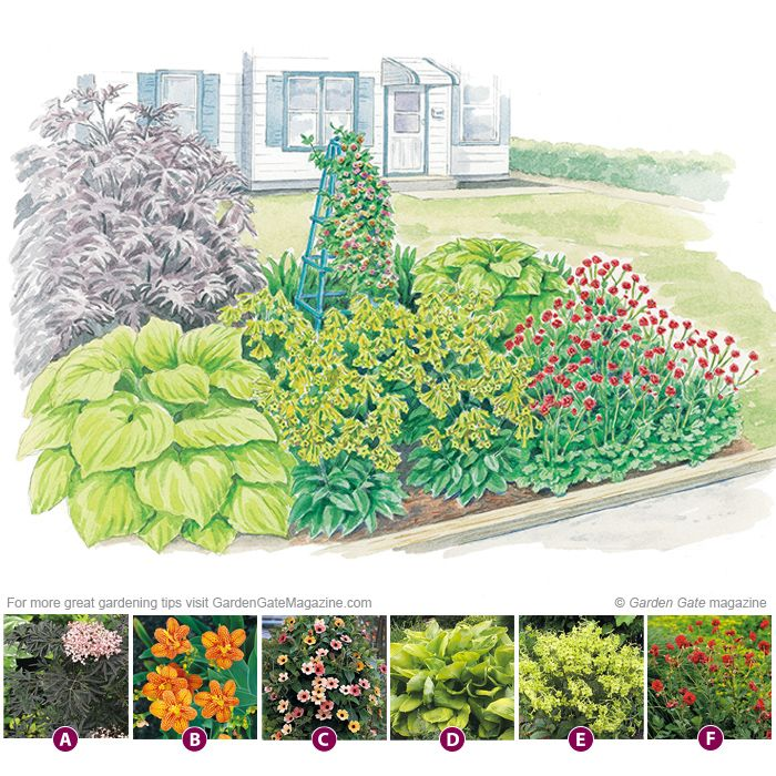 Budget Friendly Garden Border Garden Borders Garden Shrubs Garden Planning