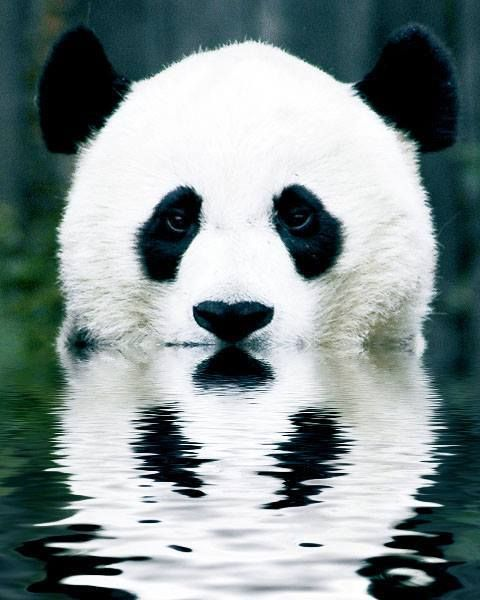 ninja panda (you have to say it right in your head =P)