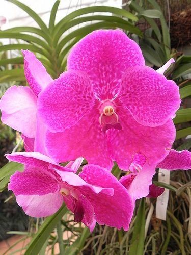 The Royal Botanical Garden Peradeniya Kandy Sri Lanka Www Secretlanka Com Blossom Garden Orchids Orchid House