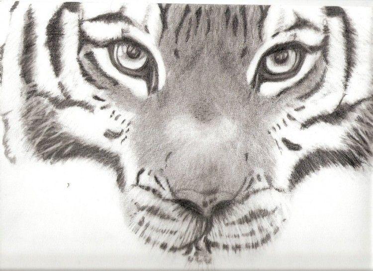 Tete De Tigre Dessin Colorier Les Enfants Marnfozine Com