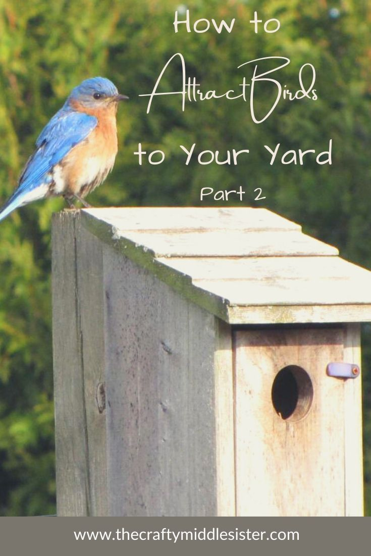 How to attract birds to your yard part 2 the crafty