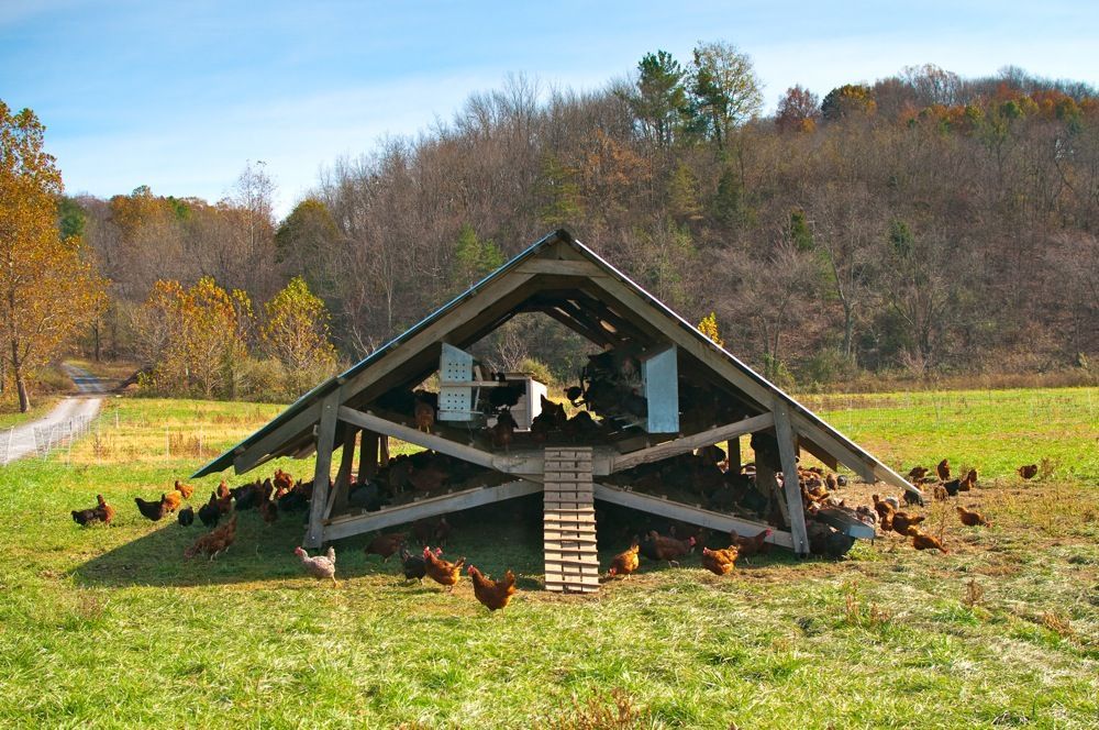 An Egg Mobile is a movable chicken house designed to house