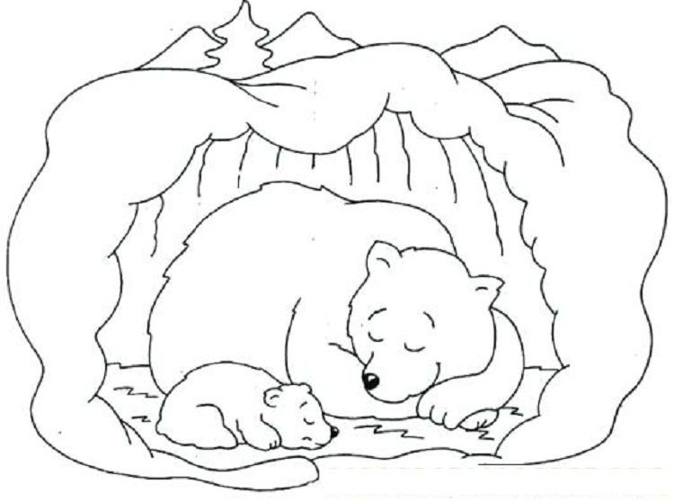 Hibernating Bear Coloring Pages Free Download Or Print The Image