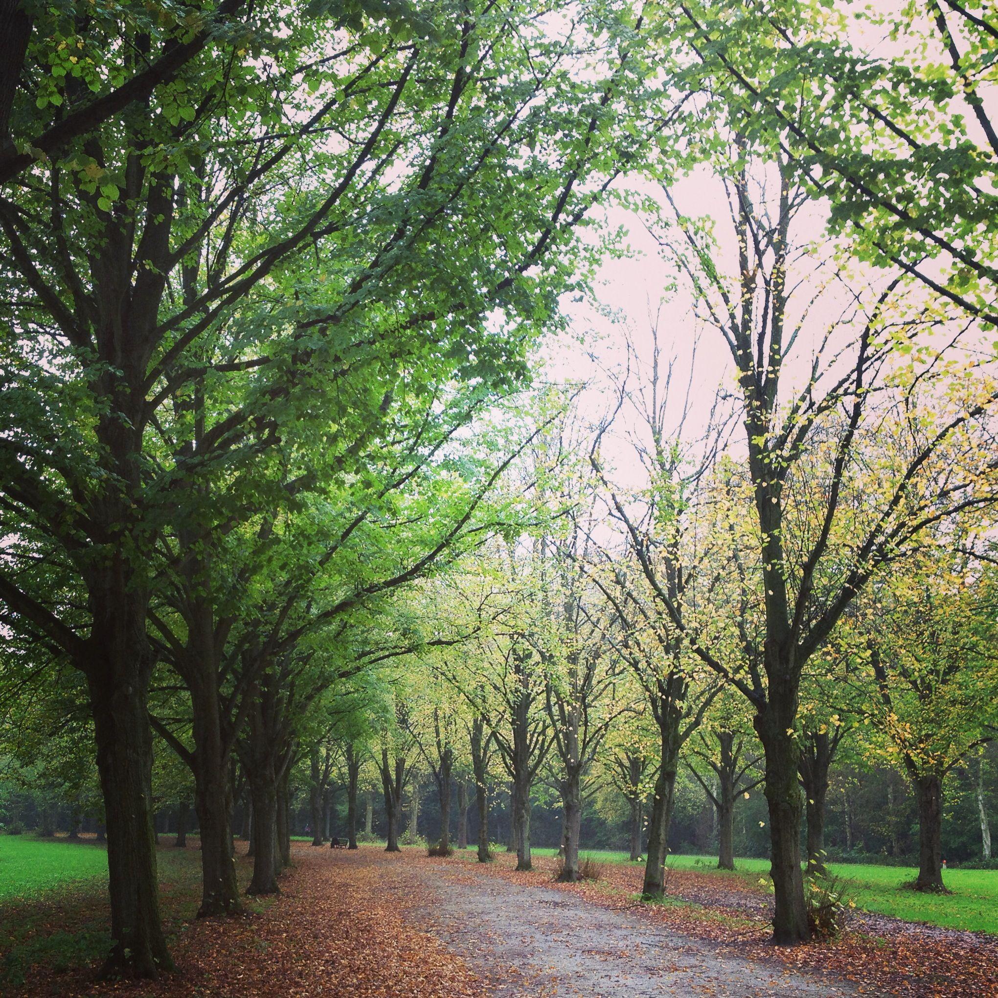 Amsterdamse bos oktober 2014