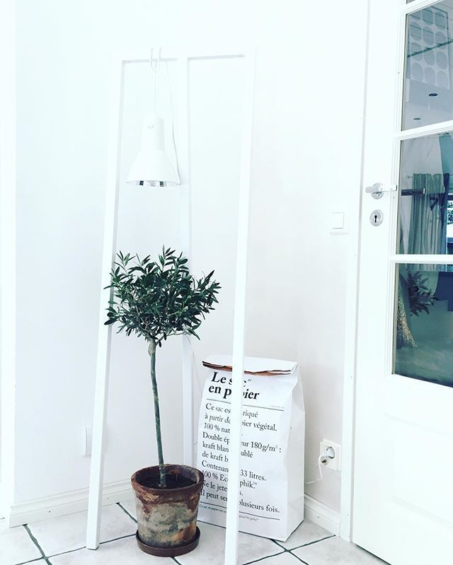 // Welcome n e w month! // Olivetree moved inside  #byebyeaugust #interiordesign #interiorinspiration #inredningsinspiration #inredning #interior #interiørmagasinet #nordiskahem #nordic #scandi #interior123 #passionforinterior #nordicminimalism #minimalove #designlovers #finnishhome #inspiration #home #hem #heminredning #mitthem #finahem #vakrehjem #munkoti #skandinaavinenkoti #sisustus #sisustusinspiraatio #sisustusideat #etuovisisustus