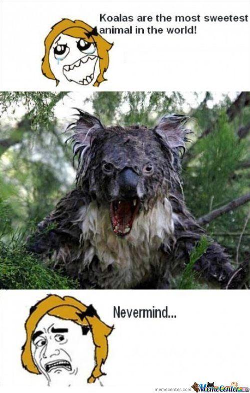Koala Funny Funny Koal...