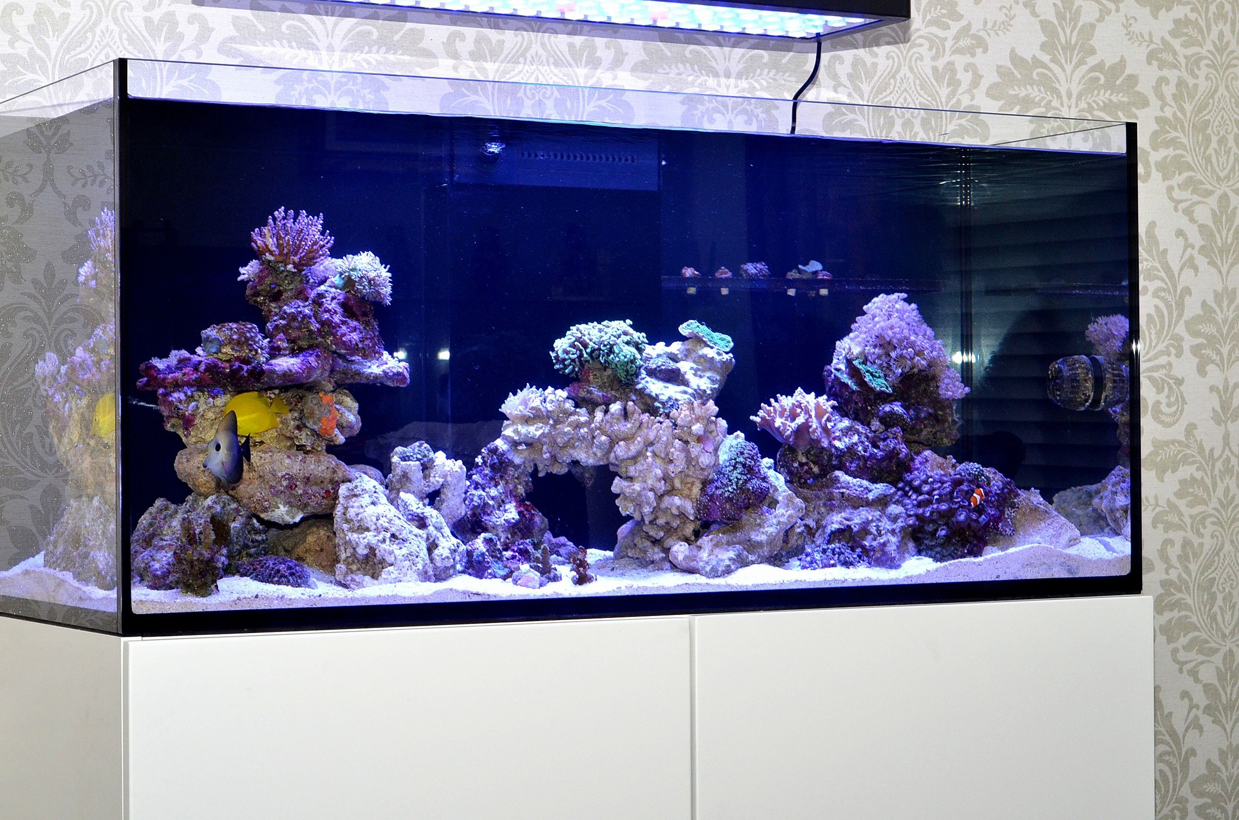 red sea reefer aquarium Rimless design Saltwater Pinterest