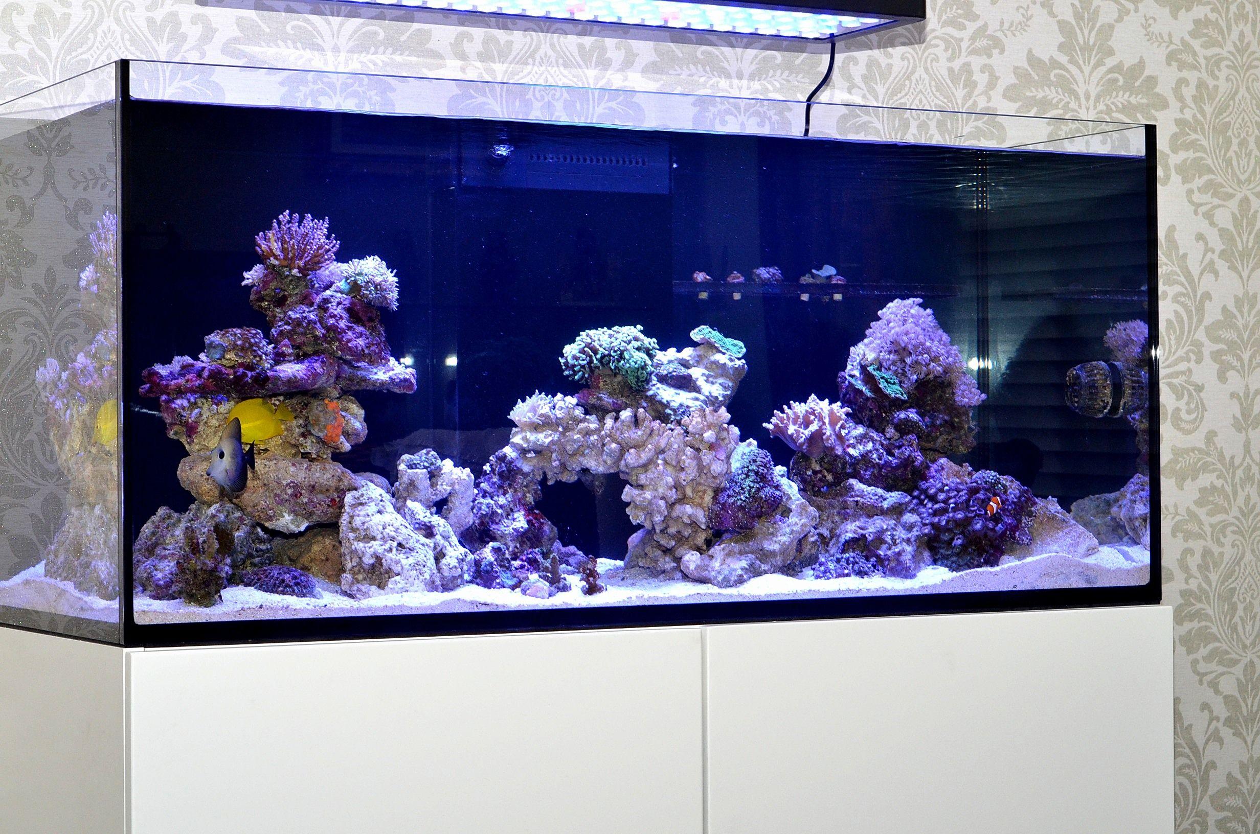 72f7bc19d94d9801fc51fe5a9d4928b1 Frais De Aquarium 450 Litres Des Idées