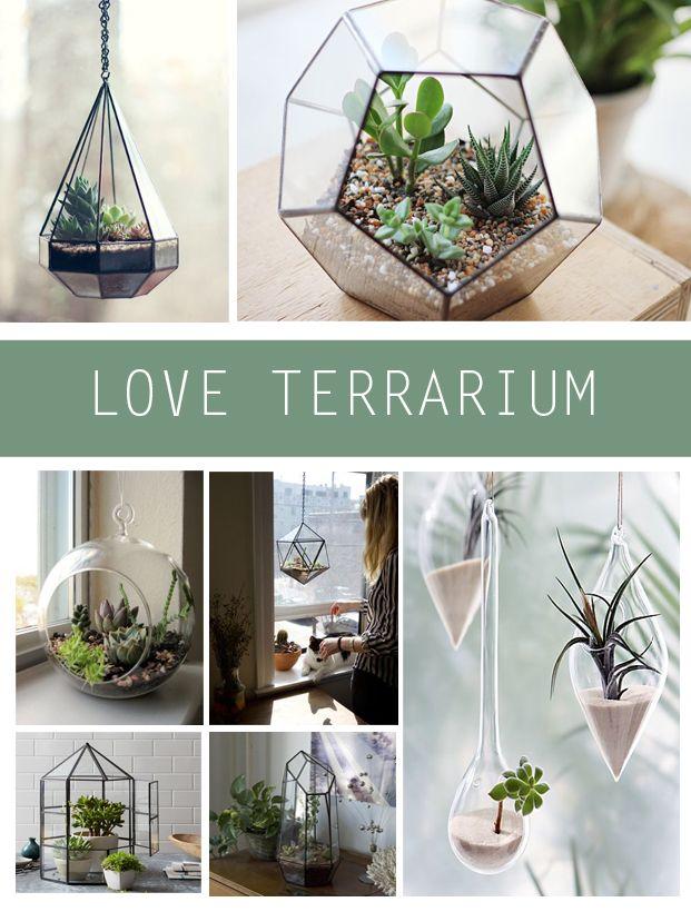 cr er un joli terrarium d co terrarium jardins et. Black Bedroom Furniture Sets. Home Design Ideas