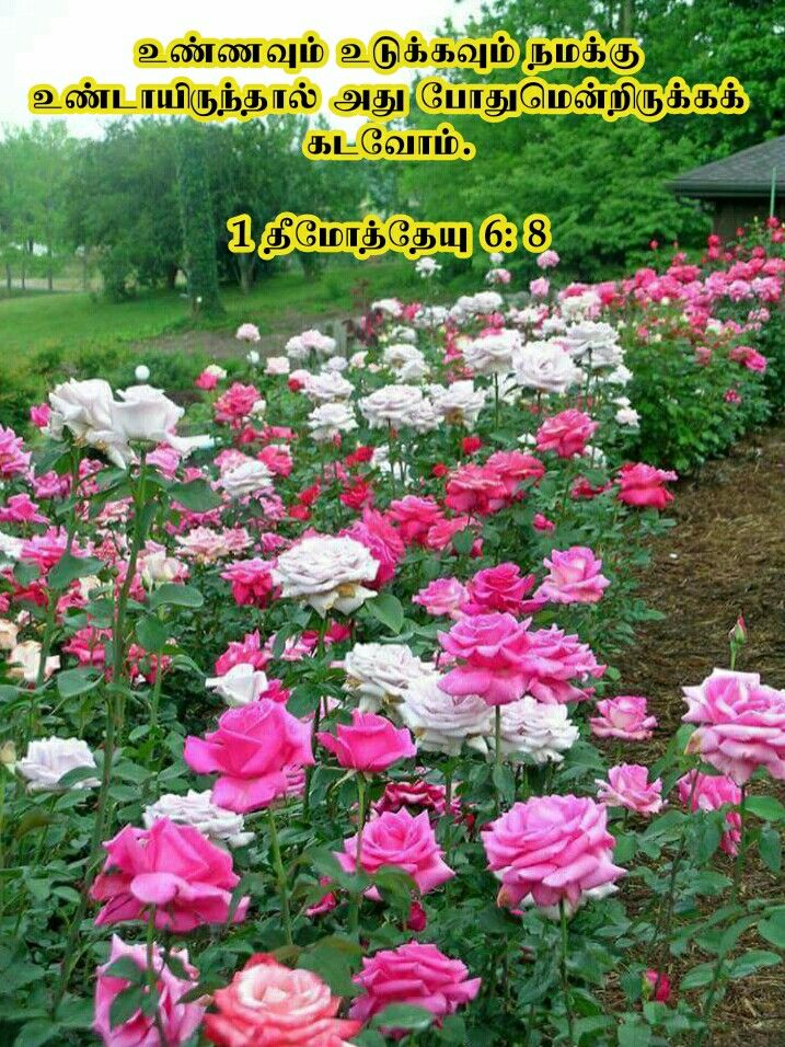 Pin By Tamil Mani On Tamil Bible Verse Wallpapers Beautiful Flowers Flowers Nature Beautiful Roses