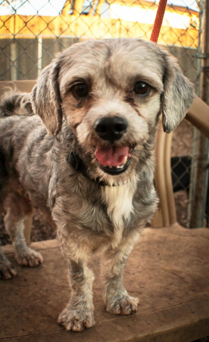 Adopt Oliver On Poodle Mix Dogs Dogs Adoption