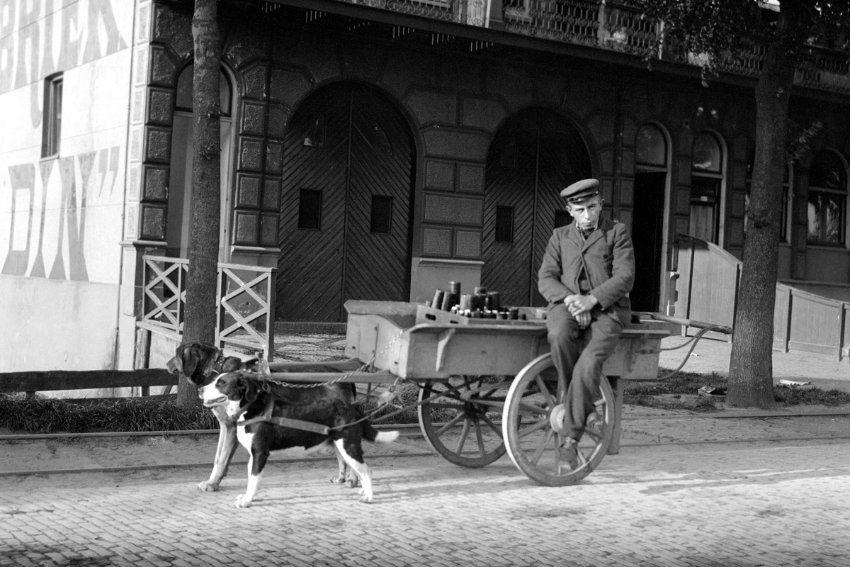 Hundegespann:  Auf diesen Herrn und sein Gefährt trafen die Reisenden in den...