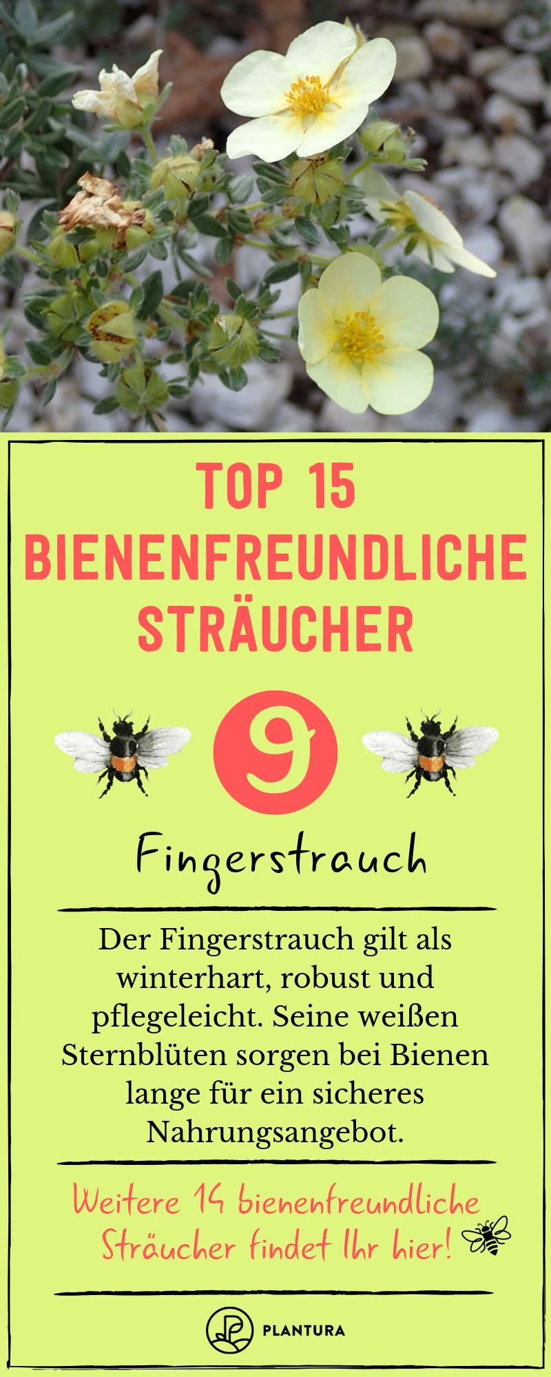 Bienenfreundliche Straucher Top 15 Bienenstraucher Bienenfreundliche Straucher Bienenfreundliche Pflanzen Bienen