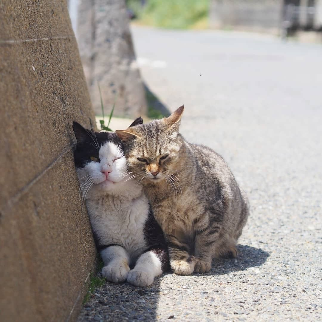 Lovely Cat couple Cute cats, Cute cat gif, Cute animals