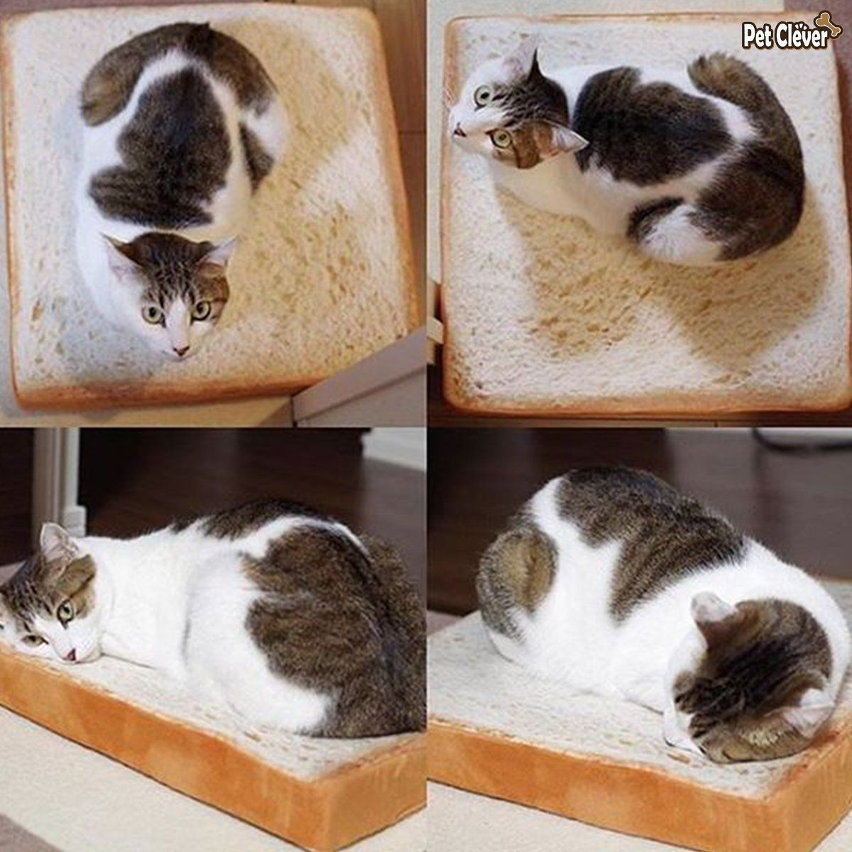 Introducing The Toast Bread Cat Bed Cat cushion, Cat mat
