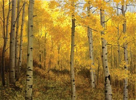 Yellow-Autumn-Forest.jpg (450×330)