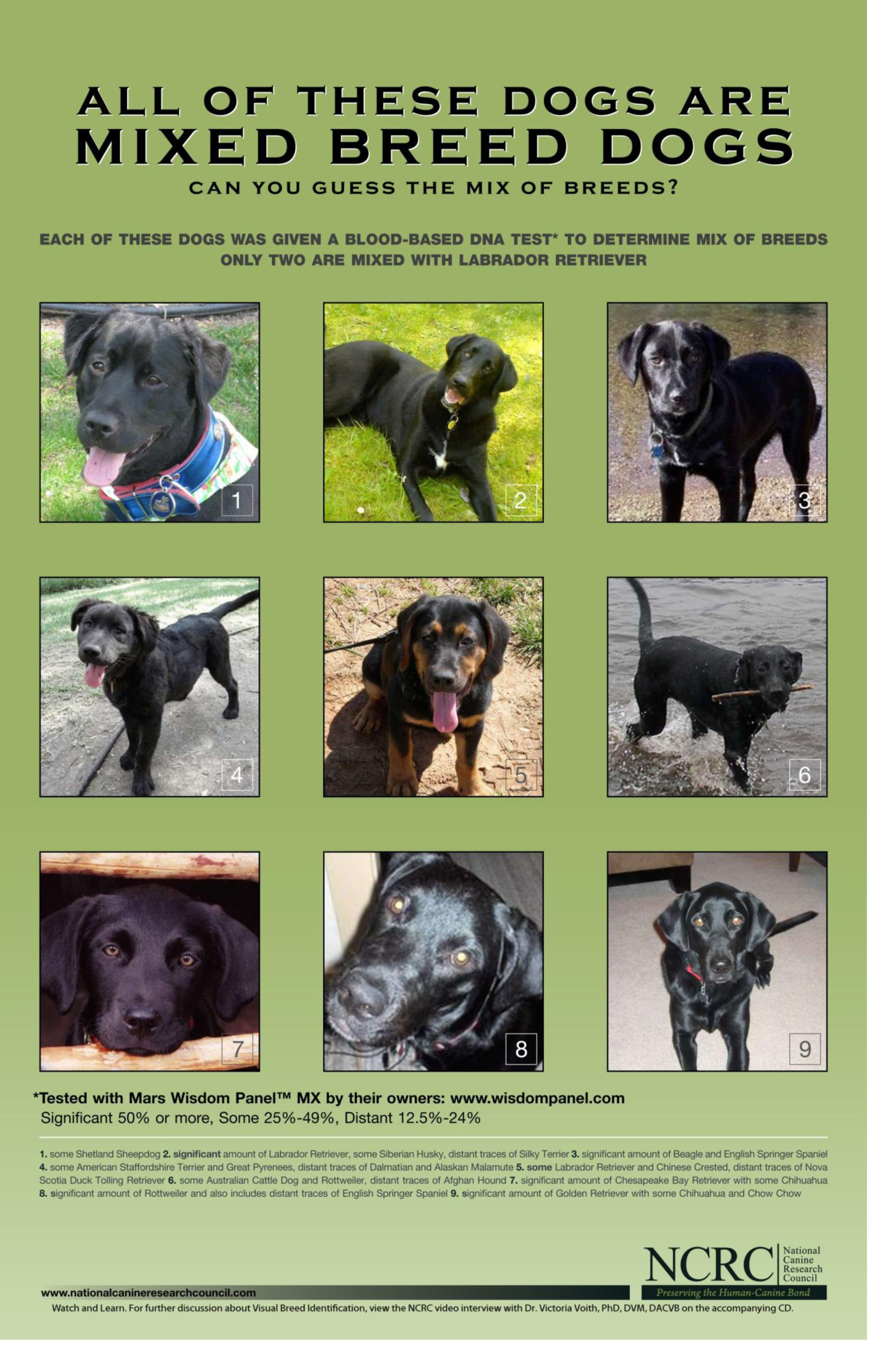 Pin By Margaret Gaston On Pets And Animals Mixed Breed Dogs