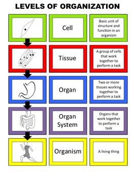17 5th Grade Body Organization Ideas In 2021 Teaching Science Science Lessons Life Science