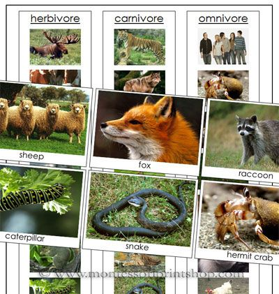 herbivores carnivores and omnivores | Animal Sorting Cards for ...