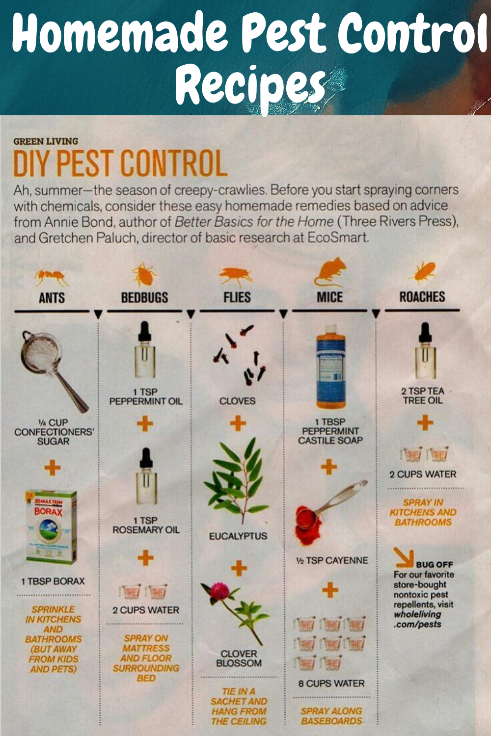 Homemade Pest Control Recipes in 2020 Mosquito repellent