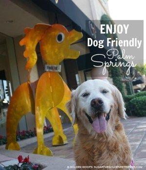 7 Ways To Enjoy Dog Friendly Palm Springs Dog Friends Palm Springs Palm Springs Resorts